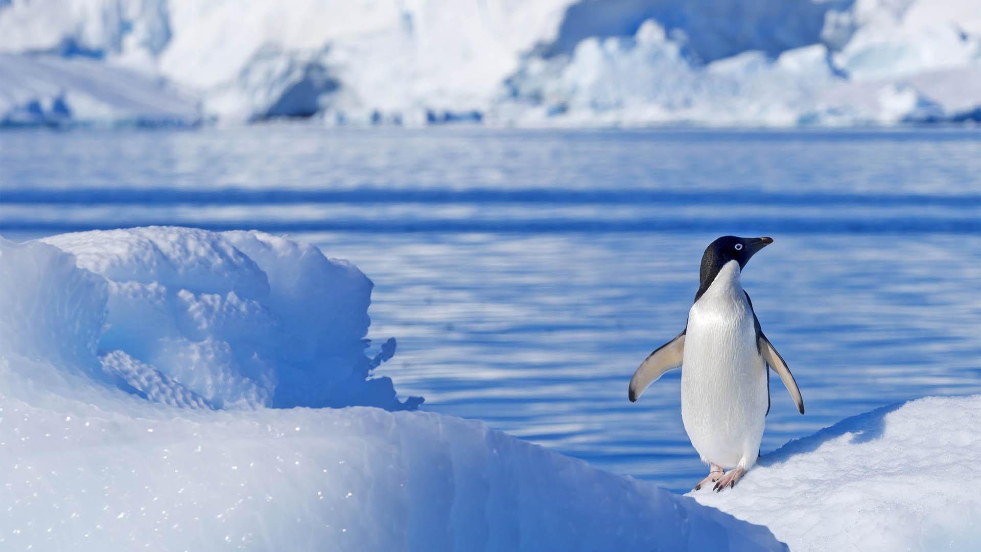 South Pole Antarctica-
