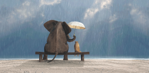 support umbrella